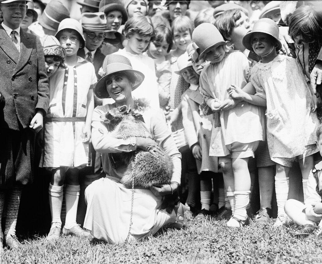 白宫,柯立芝总统夫妇养的浣熊瑞贝卡。1927年,她从总统位于南达科他州的家逃跑了。