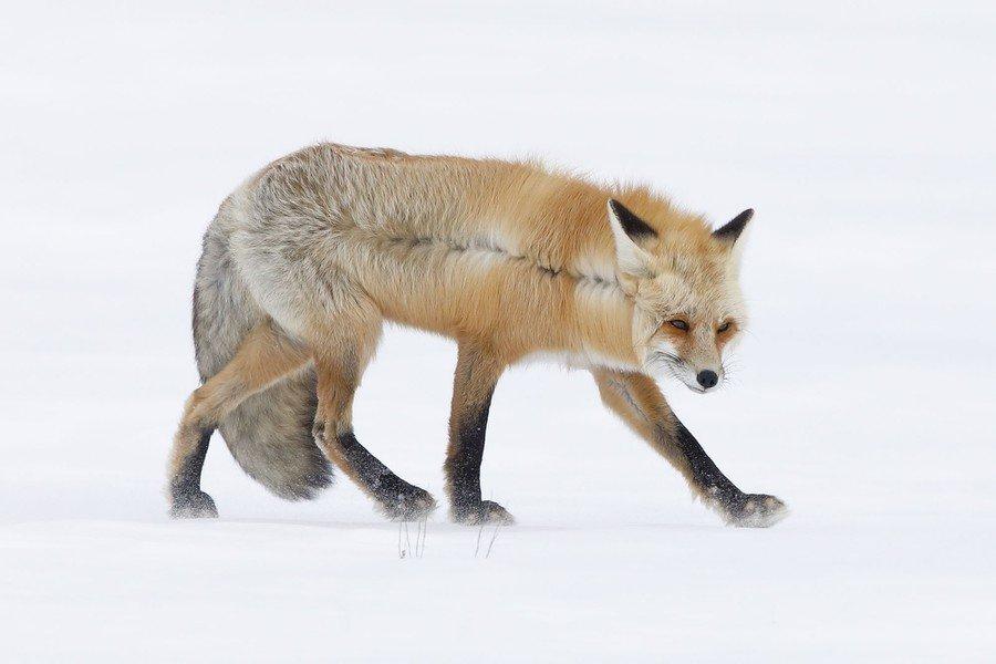 ©                                                                John Blumenkamp / Wildlife Photographer of the Year
