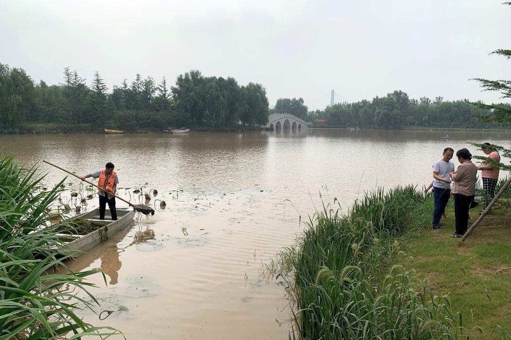 周五,一名公园工作人员正在蝶湖公园清理水草,这是郑州一处用以缓解洪水的绿色空间。
