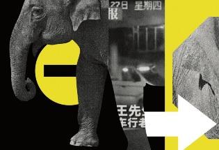 """""""出走""""的大象与一场中国互联网狂欢"""