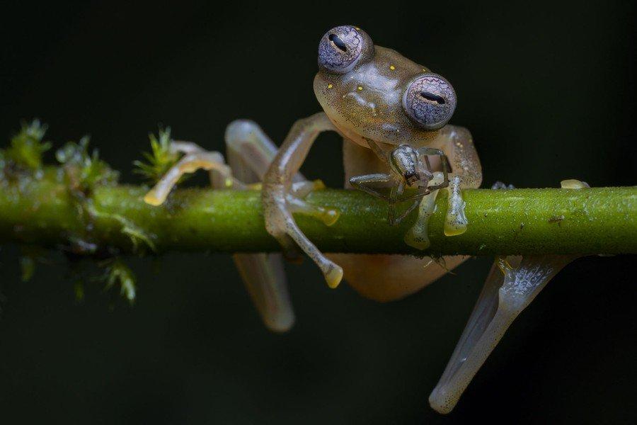 ©                                                                Jaime Culebras / Wildlife Photographer of the Year