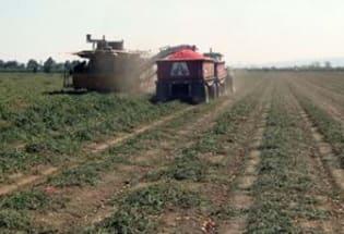 人类农业活动对地表植被的影响可能是气候变化的主因