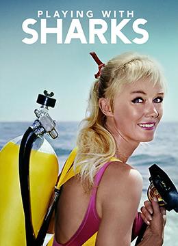 与鲨鱼游弋