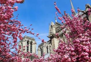 巴黎圣母院浴火两周年