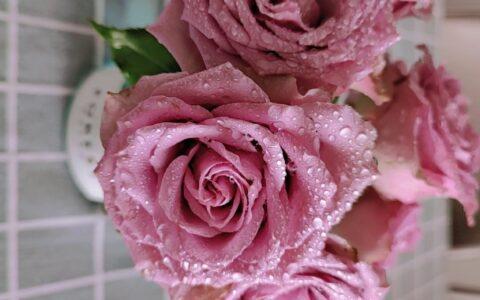发几款我在花加买的花。