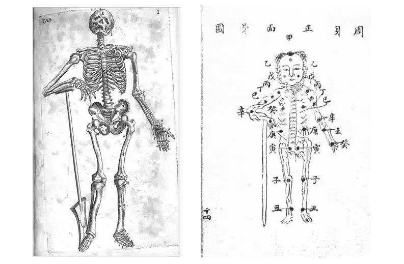 《解剖学论》和《人身图说》图之比较