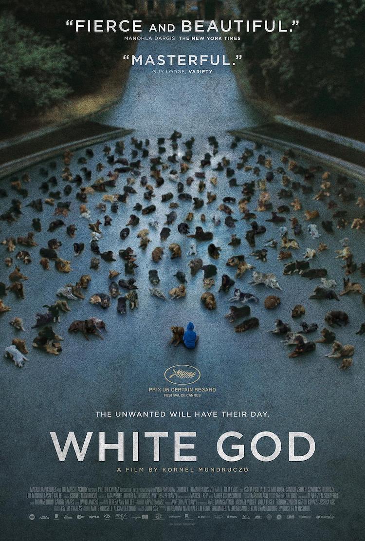 电影《白色上帝》:写实与血腥交错的镜头下的特别题材电影