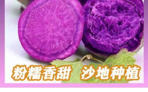 【拼多多】微信扫图片马沙地紫薯5斤【7.9】厨房架子置