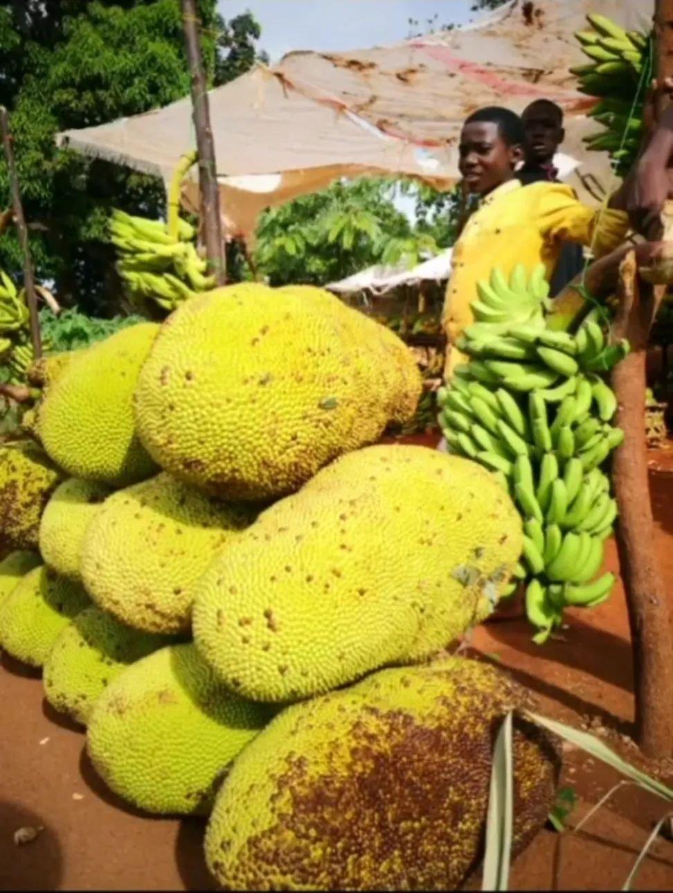 当地食品有多便宜?王科曾花1美元,买了个照片中的硕大菠萝蜜,一行5、6个人吃了好几天