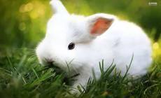 横空出世神作DEFI+NFT|Rabbit超越狗币的下一代社区代币