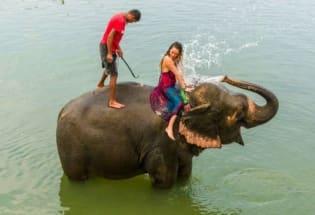 新冠疫情如何影响尼泊尔大象的命运?
