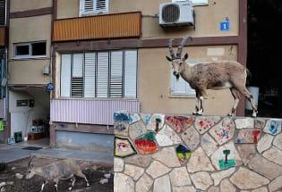 投喂难禁,小兽进城:住在城市的我们要如何与动物共生共存?