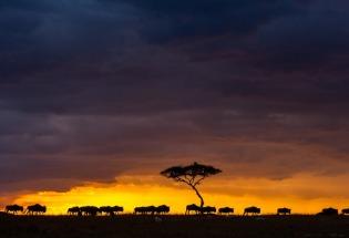 不可思议的生命旅程!回顾动物大迁徙精彩瞬间