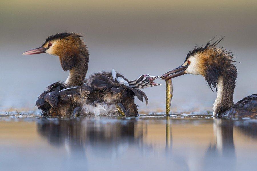 ©                                                                Jose Luis Ruiz Jiménez / Wildlife Photographer of the Year