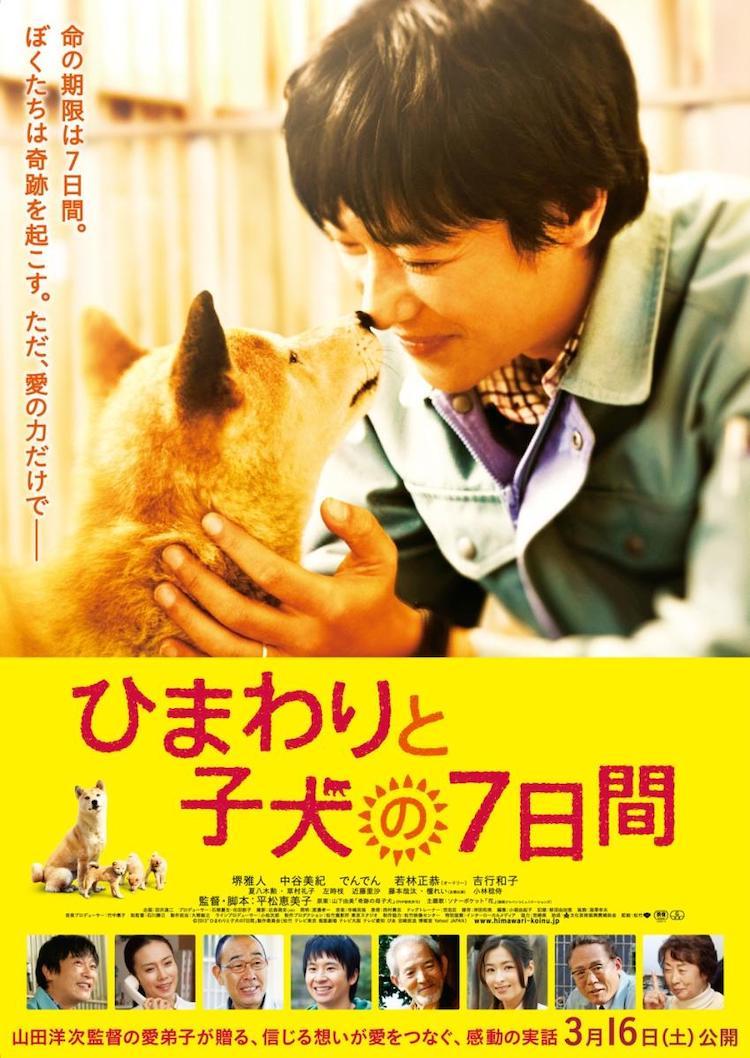 《向日葵与幼犬的7天》电影:希望不只是昙花一现的奇迹
