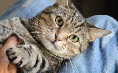 24小时交易量增长827.48%  Cool Cats再引NFT热潮?