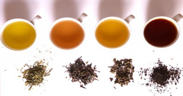 改变中国命运的茶,原来作物有故事