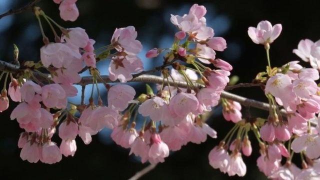 图像加注文字, 春天的花朵总是给人们带来希望。