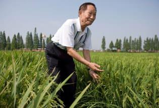 """""""杂交水稻之父""""袁隆平去世:帮助世界解决饥荒和贫困"""