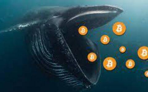 借币近5万枚做空BTC,揭秘加密生态中的巨鲸