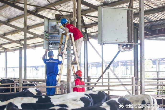 千垛镇黄花村奶牛养殖基地检查维护用电设备