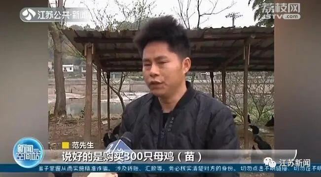 男子网购300只母鸡苗 几个月后傻眼了:全是公鸡? 卖家消失