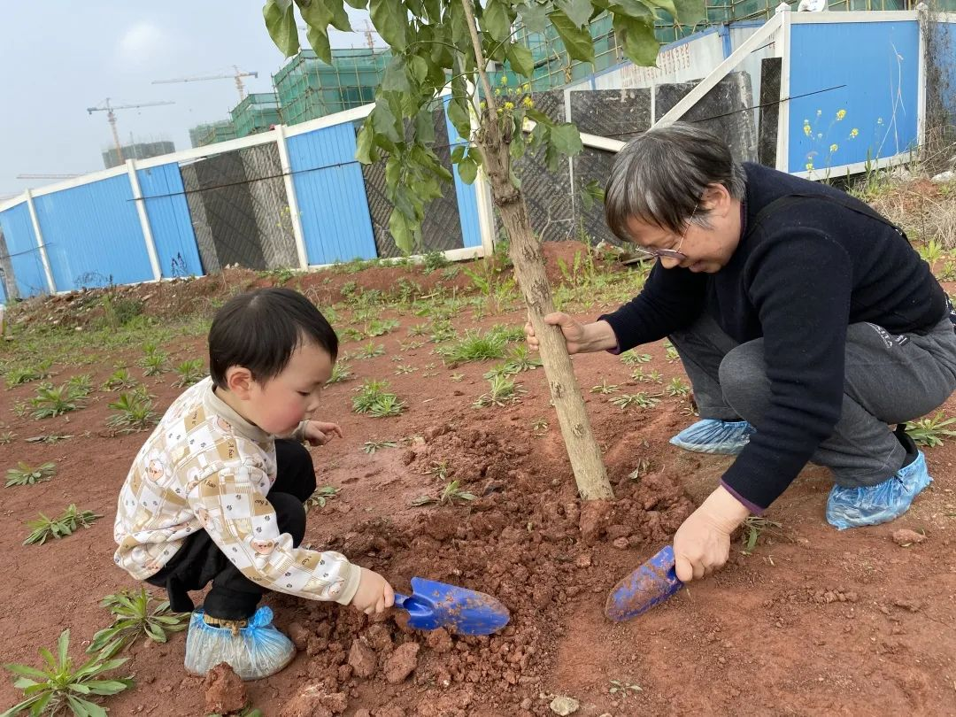 亲子植树活动回顾:种下希望,茁壮成长