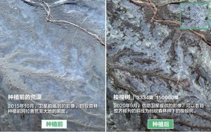 天悦登录蚂蚁森林回应未种植梭梭:顽强存活2年 就是比较矮小