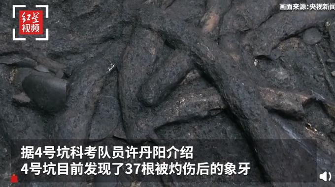 罕见!三星堆祭祀坑出土超120根象牙,重达100多斤、长达1.2米