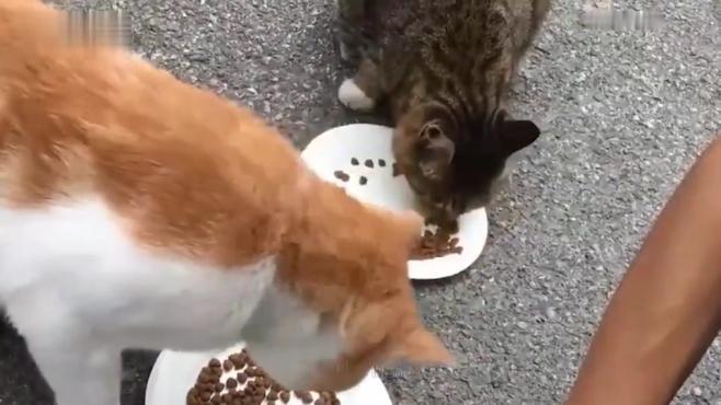 猫咪长期吃猫粮好不好?真相可能让你吃惊!