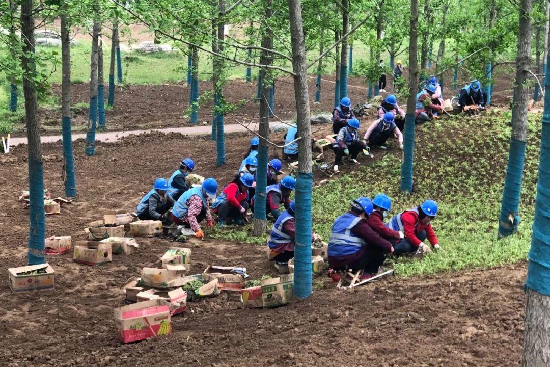 汉长安城未央宫国家考古遗址公园最新进展来了!