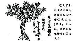 在西藏发展文冠果产业的思考