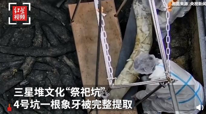 罕见!三星堆祭祀坑出土超120根象牙,在新发现的4号坑中,发现了37根被灼伤后的象牙