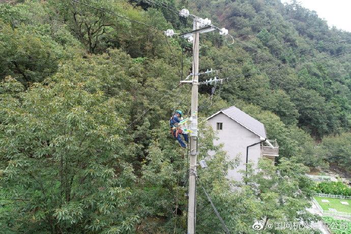 淳安电力对跨越山核桃林的输电线路进行迁移改造