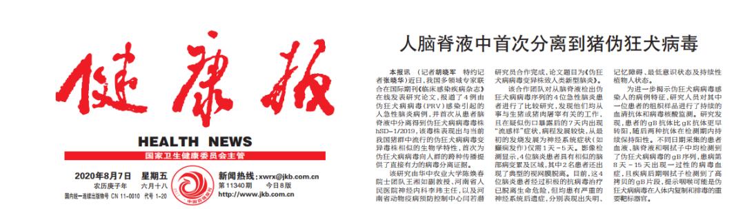 全球首次!河南省人民医院专家:人脑脊液中分离到猪伪狂犬病毒