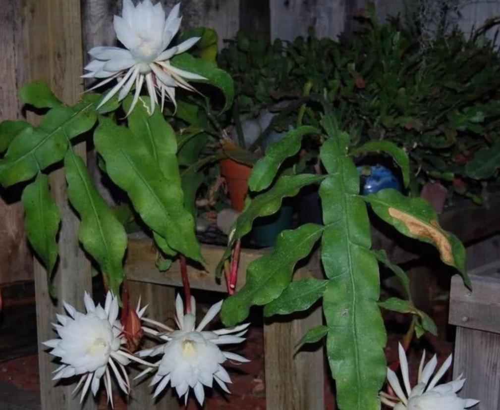 家里千万不能养的6种花,这些禁忌要知道!