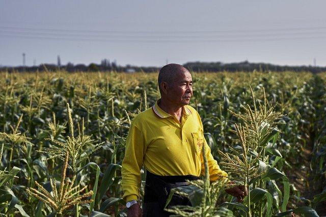 """谢财山用井水种植了一些玉米。""""当农民最不好的呀,""""他说。"""