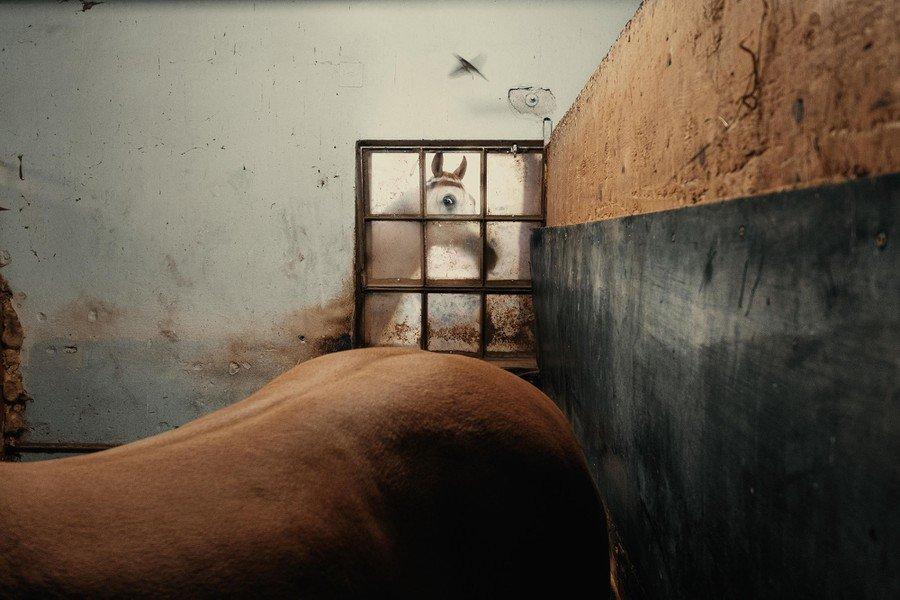 ©                                                                Francesco Lopazio, 2021 Sony World Photography Awards