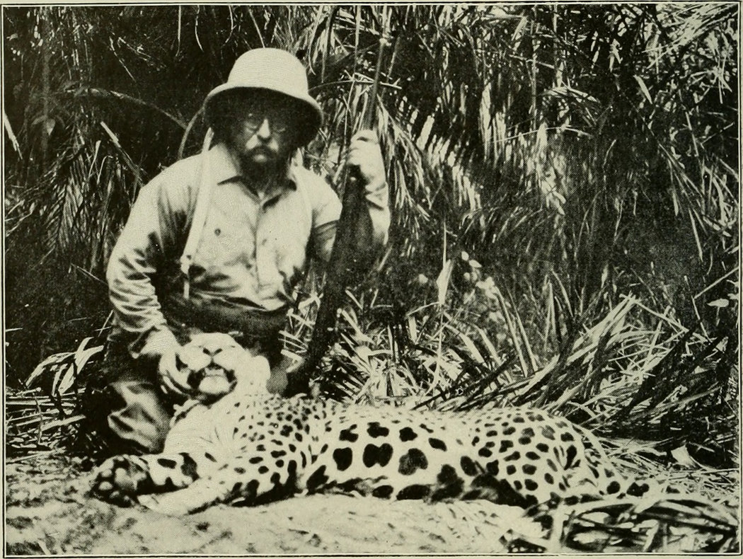 1913年,巴西,西奥多·罗斯福与被猎杀的美洲豹合影。