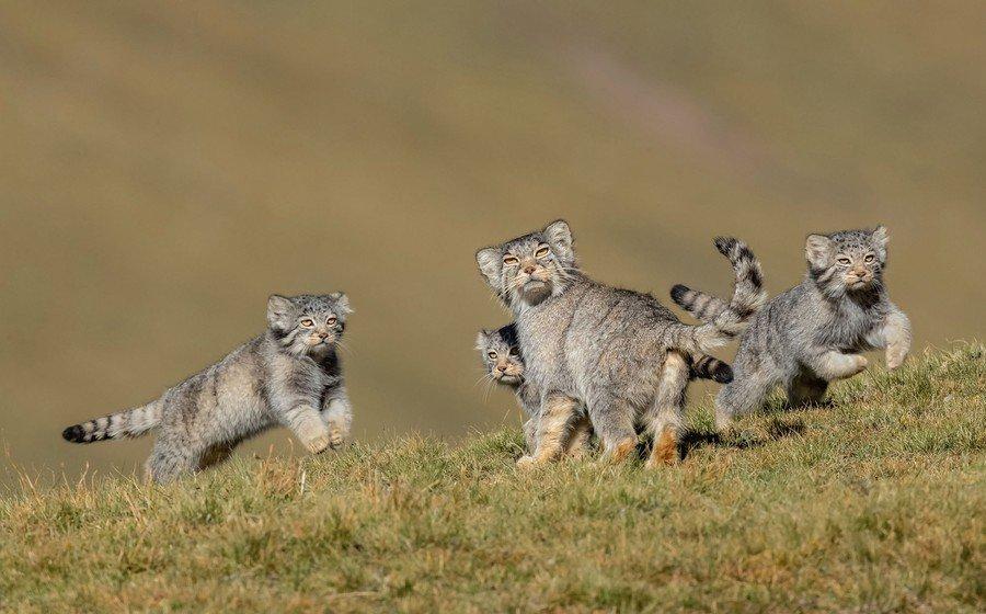 ©                                                                Shanyuan Li / Wildlife Photographer of the Year