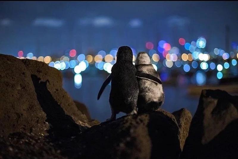 两只丧偶企鹅彼此安慰 德国摄影师拍下感人瞬间获奖