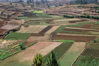 农村宅基地和住宅可以租给商家经营,农民又多一条致富途径!