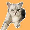猫王:火锅还能涮什么?为什么本喵不能喝奶茶