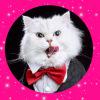 #猫#看看遇到黑心老板怎么反转