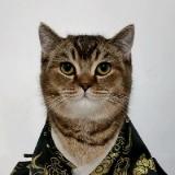 #家有萌宠#猫咪的单位量词你知道多少?