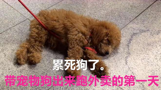 带宠物狗出来跑外卖的第一天,累死狗了