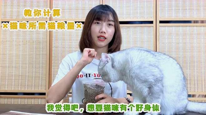 猫咪一天需要多少猫粮?今天就来教你计算,看看你家猫咪吃多没