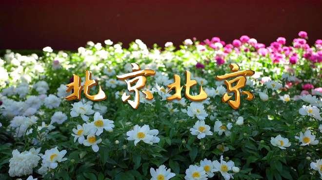 汪峰经典歌曲《北京北京》,唱出北漂心中的北京,加油北京