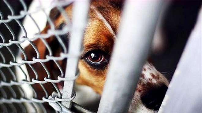 央视呼吁禁止虐动物尽快立法