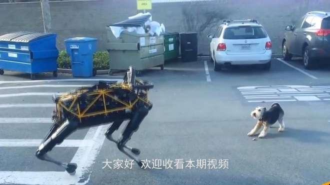 当真狗街头,遇到一只机器狗,接下来请憋住别笑!